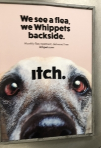 Poster of Whippet advertising flea treatment
