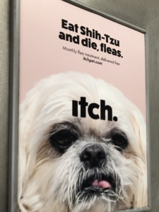Poster of Shih Tzu for advertising campaign